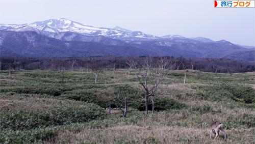 知床 北海道 世界遺産
