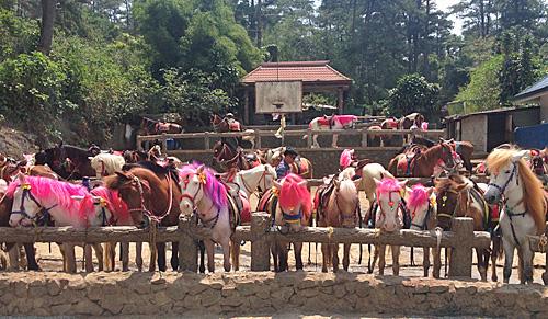 ピンクの馬達